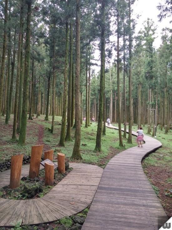 [제주도 제주시] 수령 30년 이상의 울창한 삼나무숲