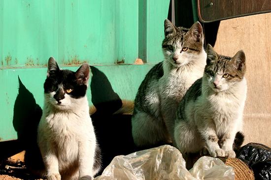 추운날씨 길고양이들의 은신처는 어디일까요
