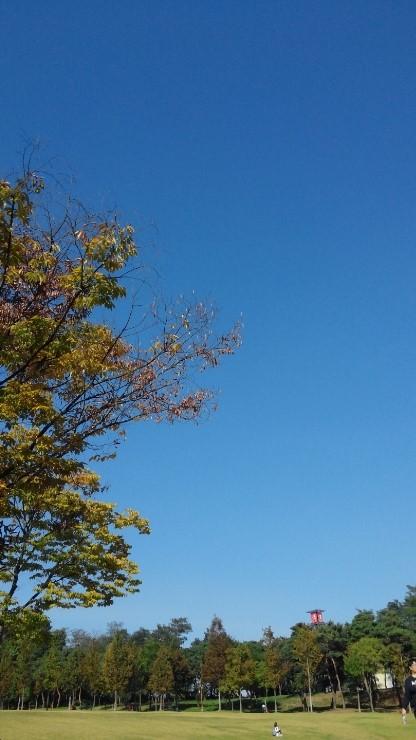 오창호수공원에서 본 가을하늘....