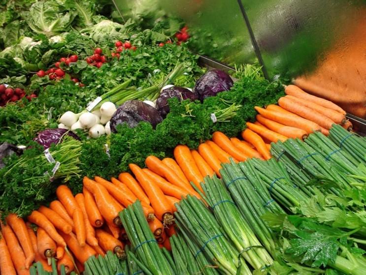 세계 유기농자재 시장