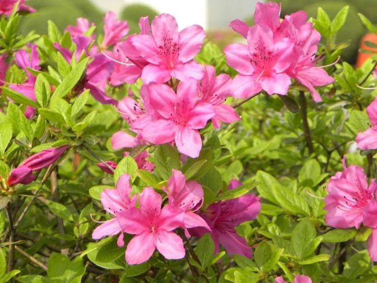 가장 좋아하는 봄꽃