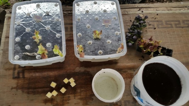 4월 6일 & 7일 수경재배 및 간척지 토양 재배실험 준비
