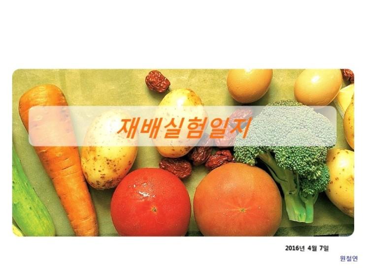 재배실험 (2016년 4월 7일 숙주나물 재배실험) - 유기농자재- 실패