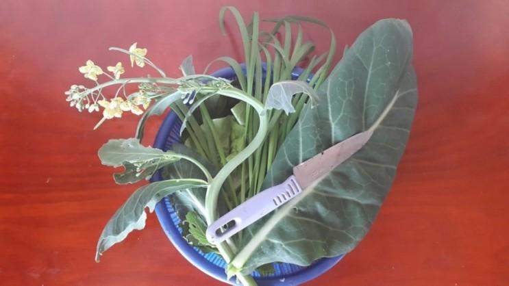 꽃대 - 식물은 번식을 위하여, 사람는 오래 먹기 위하여