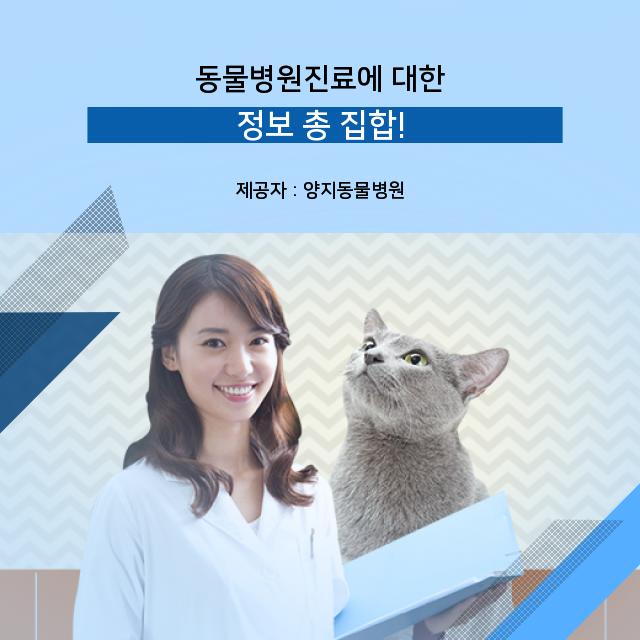[관악구동물병원] 동물병원 진료 연관 이야기