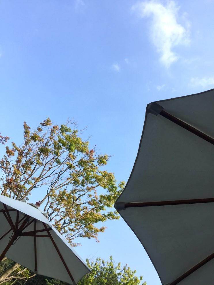 선물같은 날씨 6월 여름날, 야외테라스 까페에서 하늘 바라보기