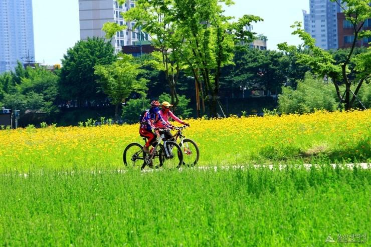 울산시, 광역권 '최초' 카카오 T 바이크 '무인 공유 자전거 대여 시스템' 시범 운영