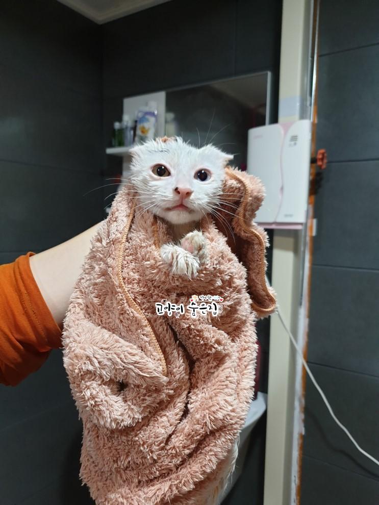 집사 강제 간택으로 '묘생역전' 성공한 오드아이 고양이 서리의 길고양이 시절을 살펴보자! #고양이숨은집 :: 코숨TV :: 먕낑왔서리
