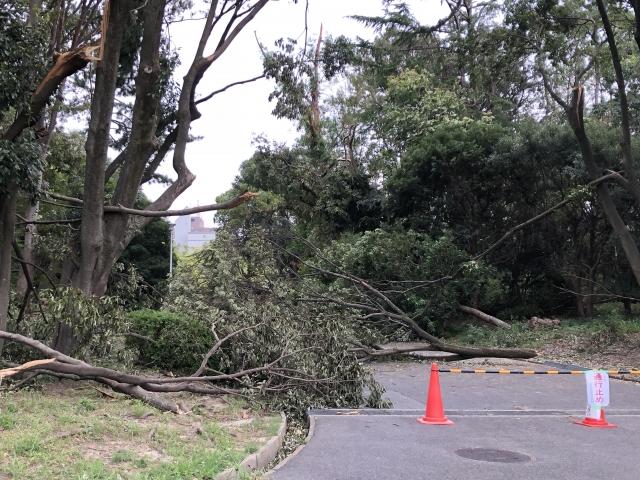 [뉴스 일본어] 6. 태풍 파사이 일본 수도권 피해상황