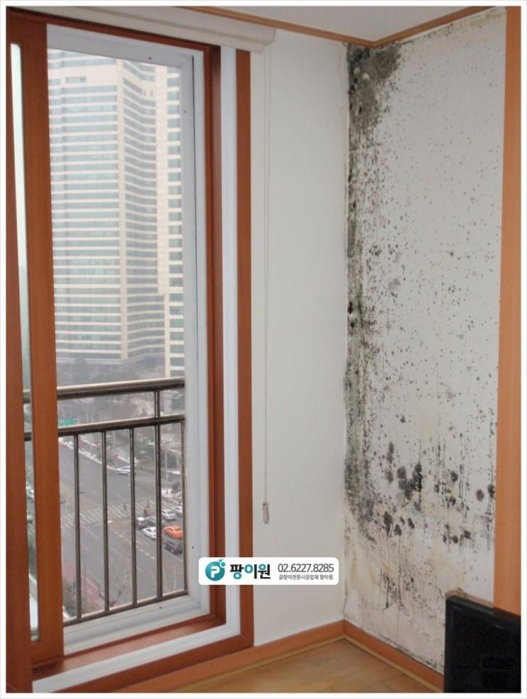 아파트 확장방 벽지 곰팡이제거 해야 한다면?