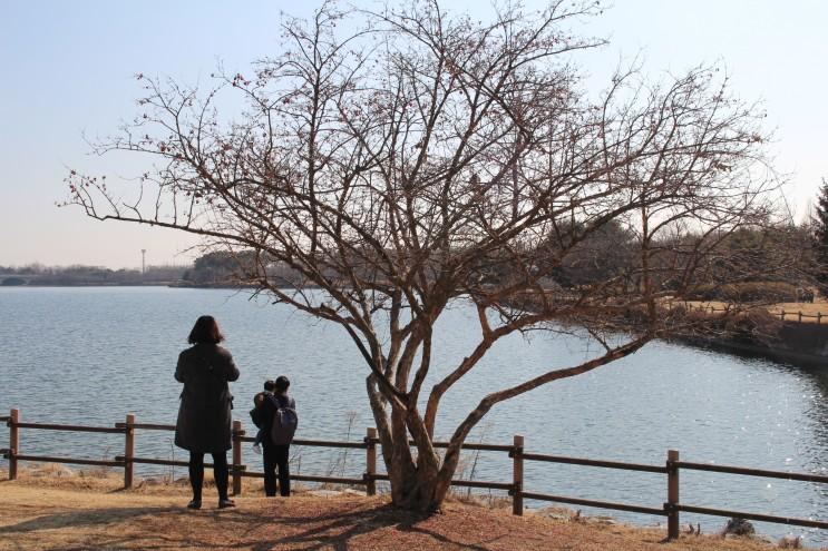 일산 호수공원