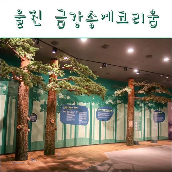 경북 울진 여행 / 미리 다녀온 금강송 에코리움 테마전시관
