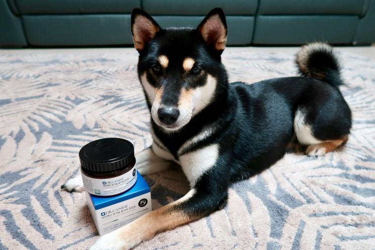 보리의 유기농 강아지 뼈관절영양제:: 닥터캐닌 로가닉조인트