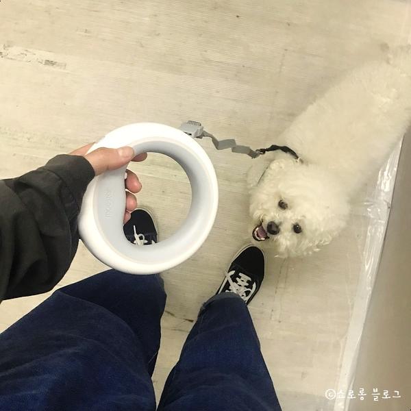 샤오미 UFO 강아지 리드줄, 산책 필수템 구매 리뷰! 구매처 공유