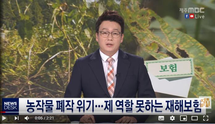 농작물 폐작위기…제역할 못 하는 재해보험/ 제주MBC