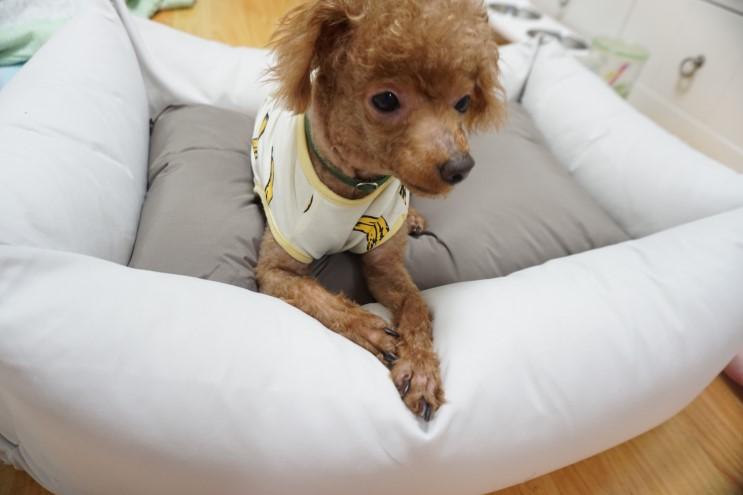 사계절용 푹신한 강아지 마약방석 꿈나라 밤산책하러 슝~