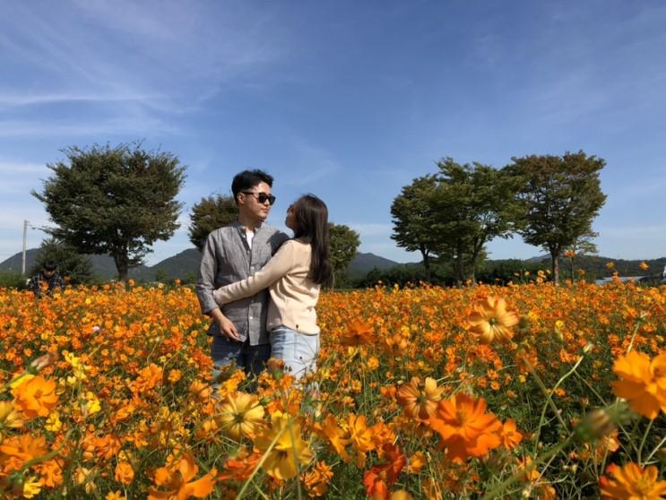[개천절, 한글날] 코스모스 꽃구경은 남양주 물의 정원!! 지금이 진짜 절정!!