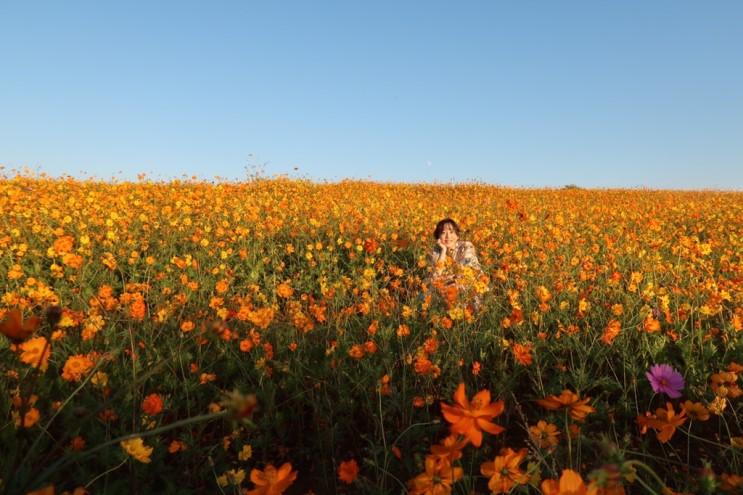안성팜랜드 꽃밭에서 사진찍기