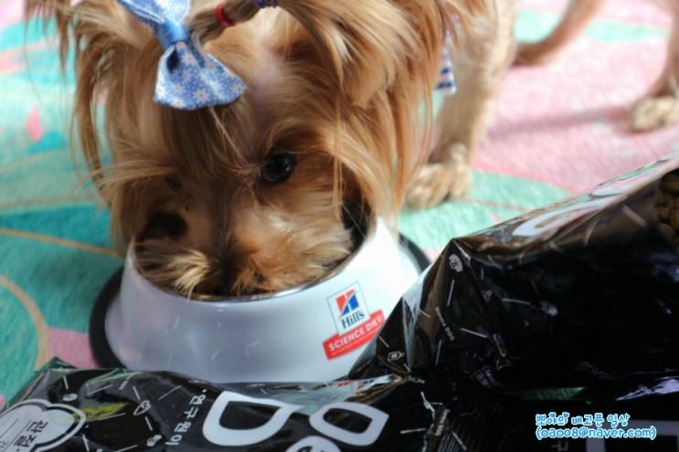 강아지다이어트사료 요크셔테리어 말자에게 필요한 관절사료!