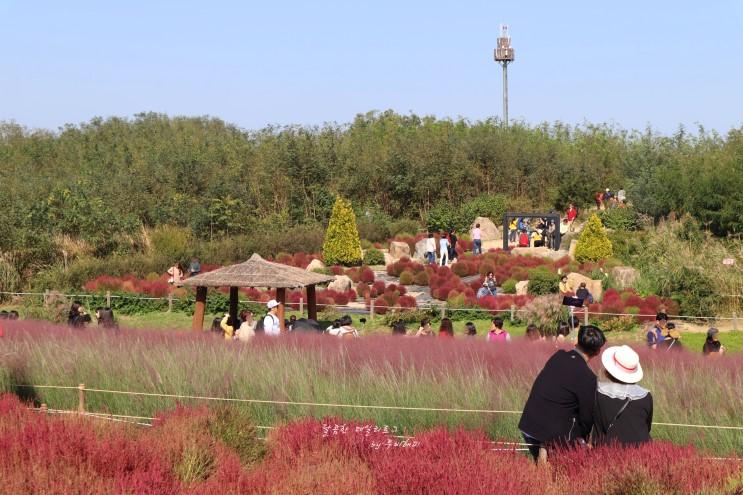 하늘공원 푸르른 하늘 아래 열리는 억새축제