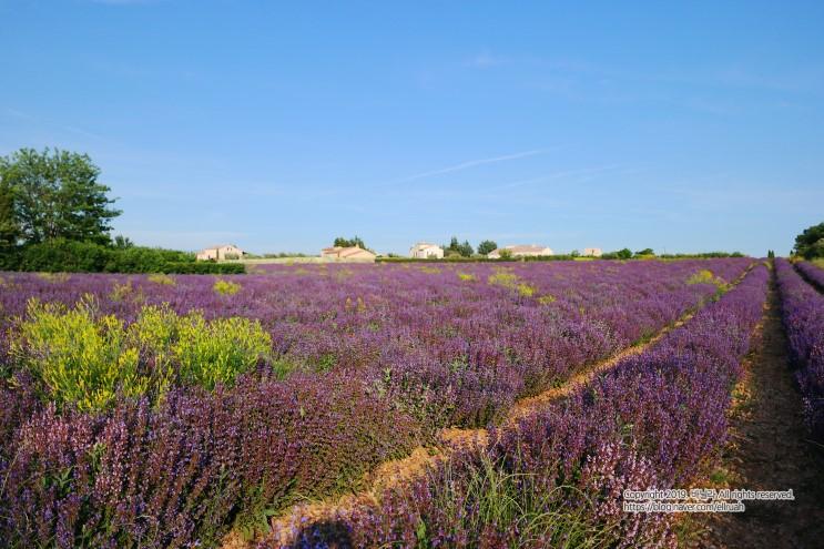 남프랑스 숙소, 라벤더농장 에어비앤비 Gîte de Lure 주변 풍경.