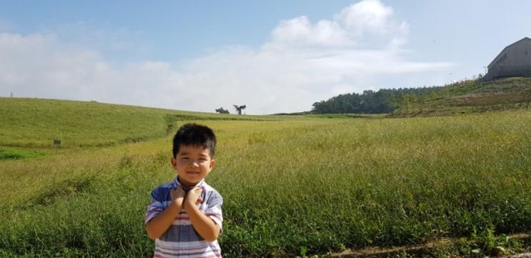 아이와함께 전라도 고창 상하농원 상하목장 파머스빌리지 먹이주기 체험