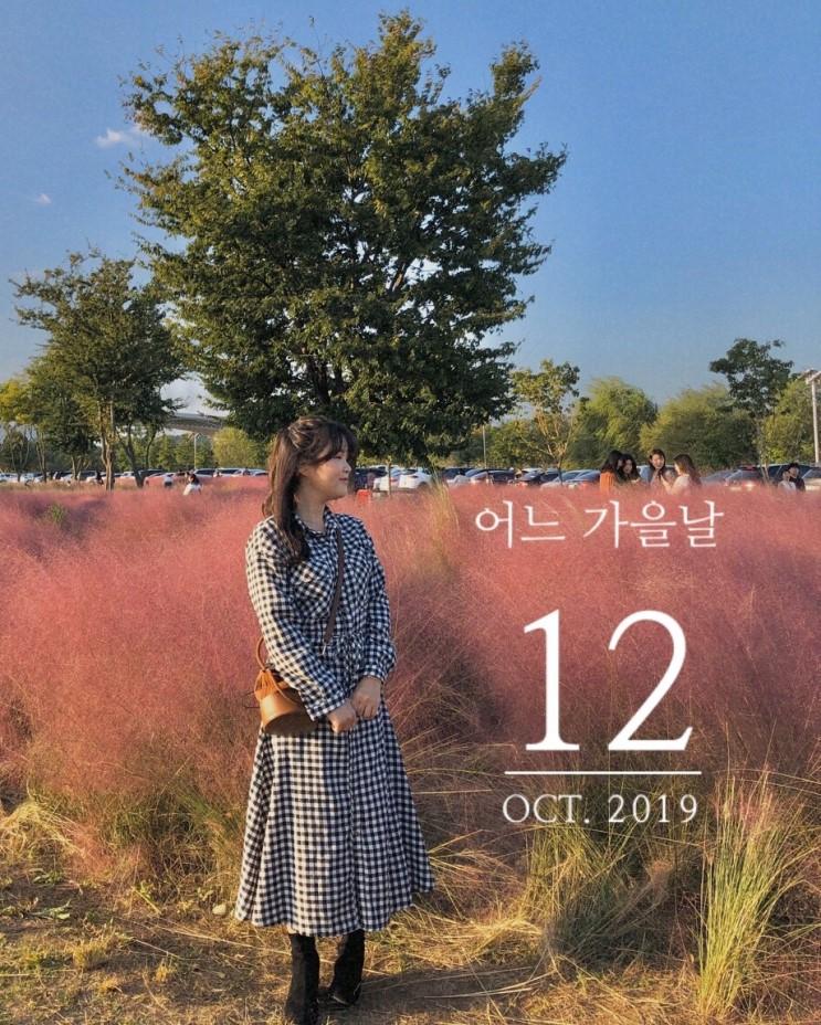 대구 핑크뮬리 피는시기 ̈ 10월 가을데이트코스추천 ︎