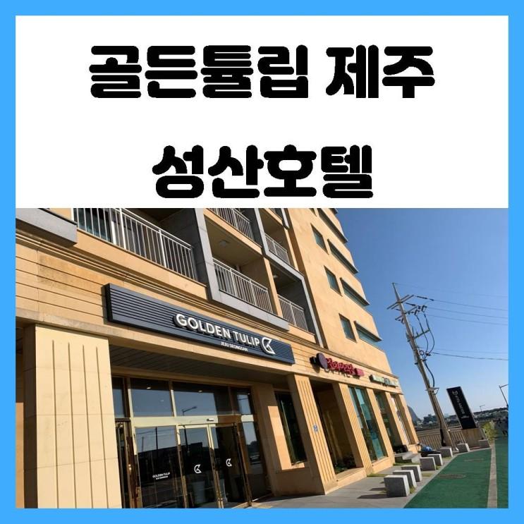 성산 숙소 골든튤립 제주 성산 내돈내산 솔직 이용 후기