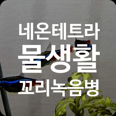 네온테트라 초보 물생활의 난관(꼬리녹음병)
