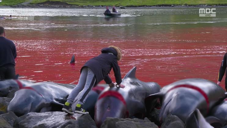잔혹한 돌고래 사냥, 전통이란 이름의 학살