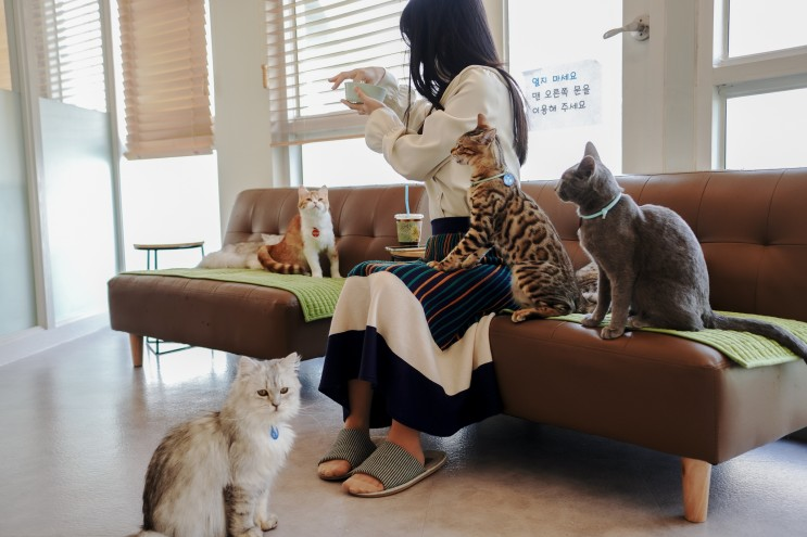 강남역 고양이카페 놀거리를 찾는다면