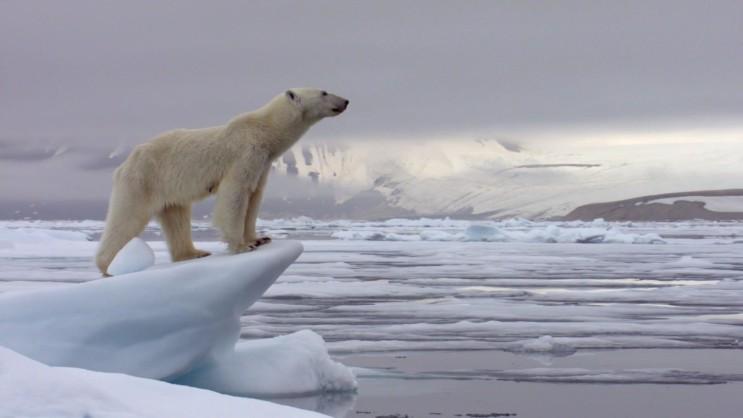 계절의 변화에 따른 북극곰의 사냥
