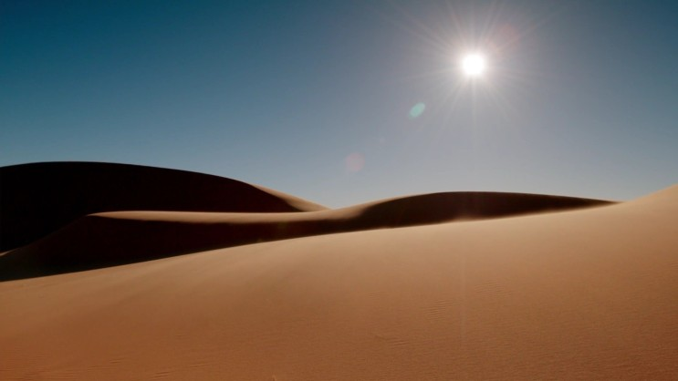 뜨거운 사막에서 살아남은 핫로드 개미(Hotrod ant)