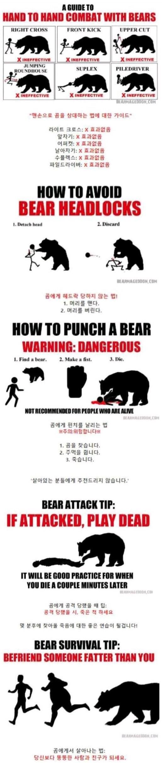 곰에게서 살아나는 법