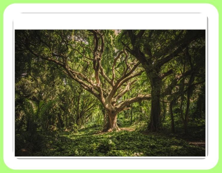 나무꿈 풀이입니다.