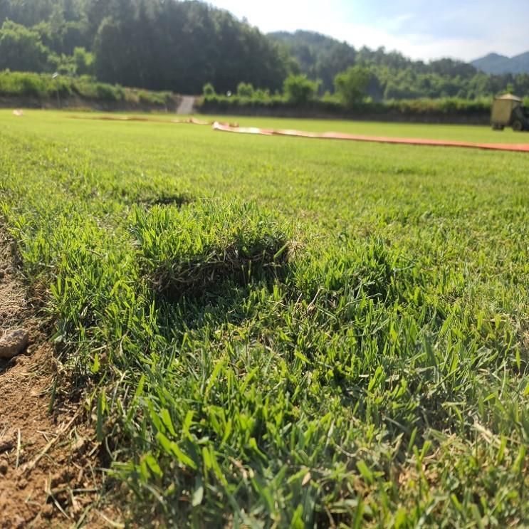 핫한 여름 잔디를 심어야 하나요?