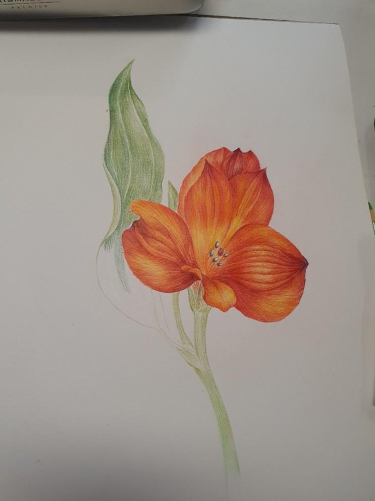 성격 바꿔주는 색연필 보태니컬아트