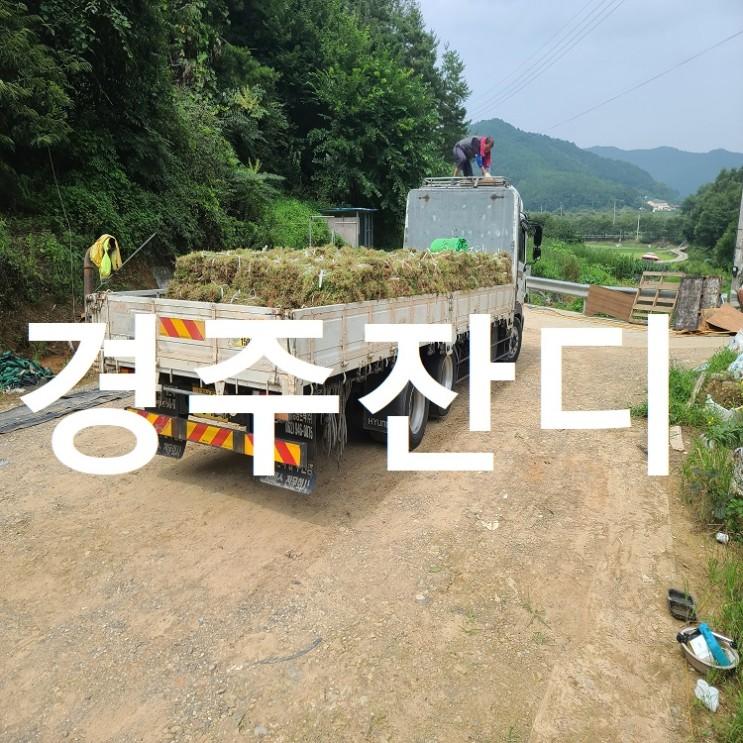 문화 유적의 도시 경주에 잔디 배송해 드렸어요.