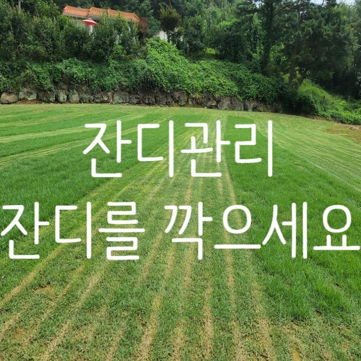 잔디 깎이를 통해 잔디 관리를 해요