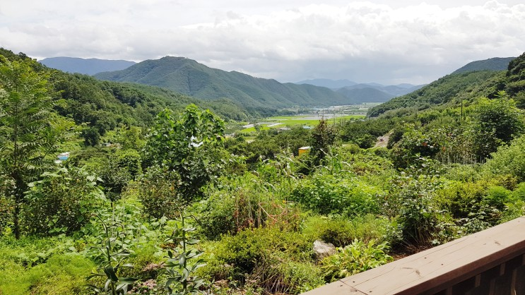 블로그씨 : 나의 리틀 포레스트, 첩첩산중 밀양 산골짜기 시댁과 아는 사람만 아는 여의도 샛강 시골 숲길