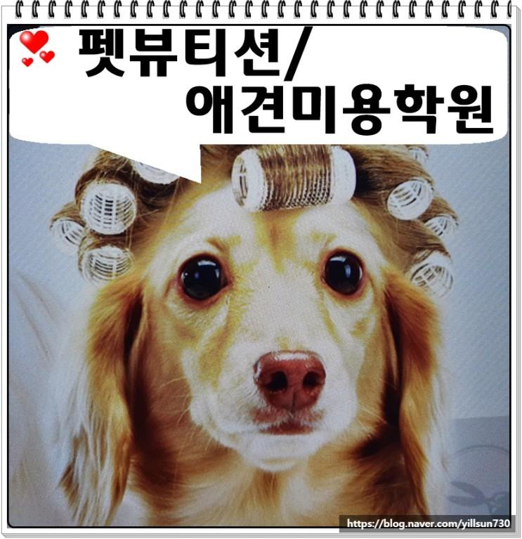 펫뷰티션 애견미용학원 실무중심으로 배우는 곳