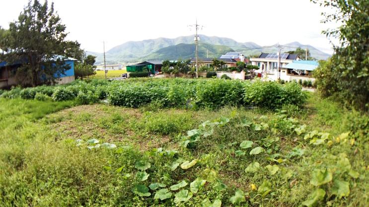 텃밭 땅 매매-포항 기북면 율산리 우사 옆에 있는  668(202평) 토지