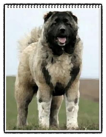 세계에서 가장 큰 개 세상에서 제일 거대한 강아지 10
