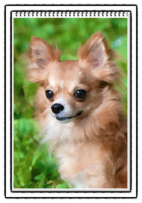 세계에서 가장 작은개 세상에서 가장 작은 강아지 Top10