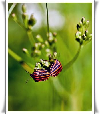 곤충꿈에 대한 해석입니다.