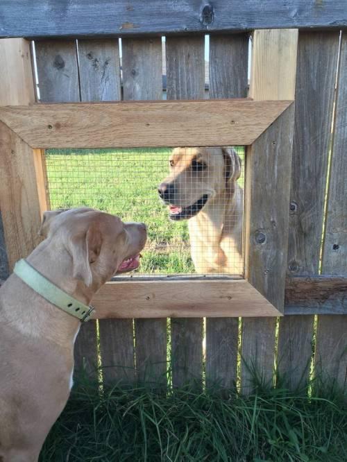 담장 강아지용 창문