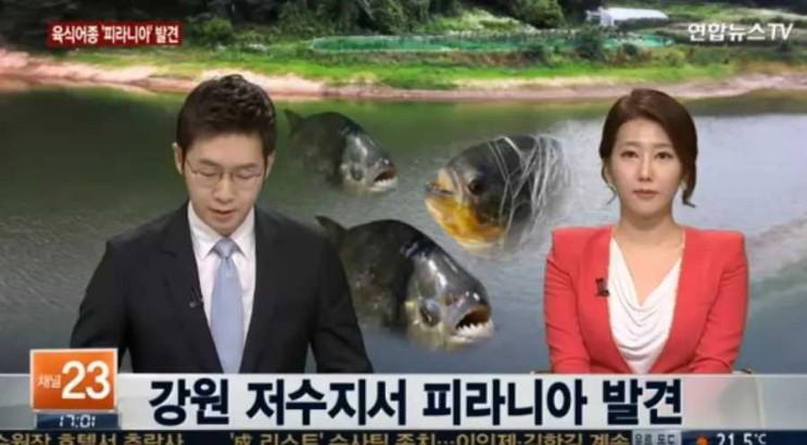 지옥이 될뻔한 물고기 방류사건(피라냐를 한국에)