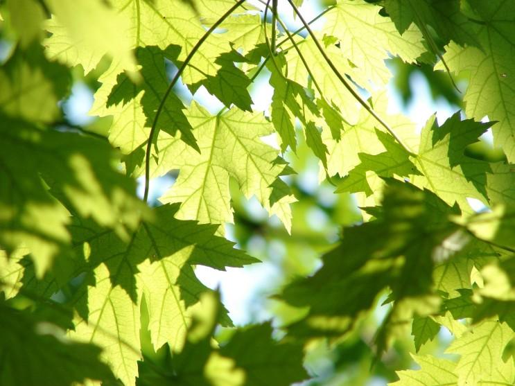 살생물제 역할을 하는 목재와 식물에서의 추출물- (주) 삼양화인, natural biocide, extractive