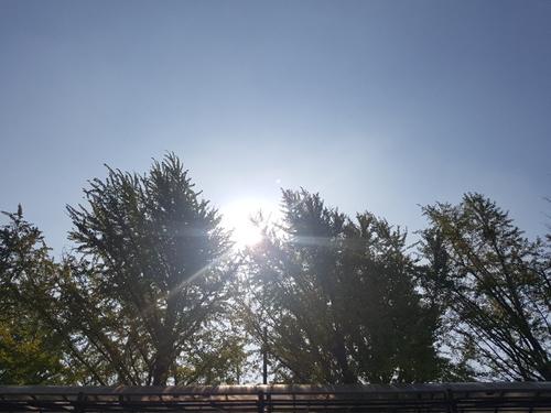 천안 아산 가족나들이 산책하기 좋은 곡교천 은행나무길