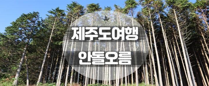 [제주도] 길쭉길쭉한 편백나무 사이에서 자연을 온몸으로 느낄 수 있는 제주도 관광지 : 안돌오름 비밀의 숲 (feat. 주차장 주소)